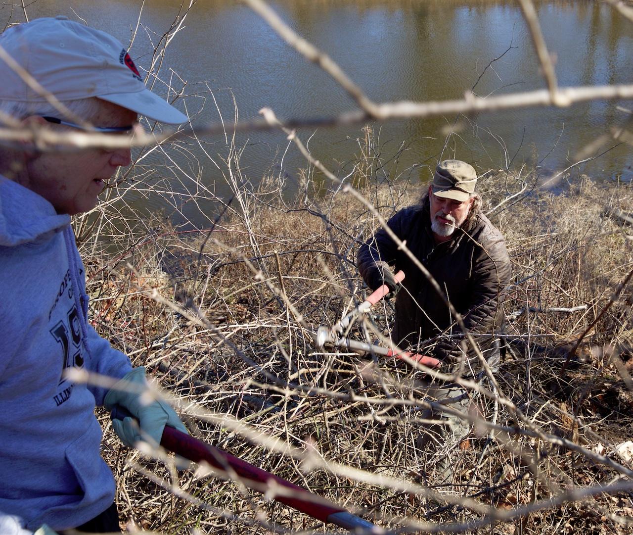 Volunteers on hill, cutting invasive honeysuckle.
